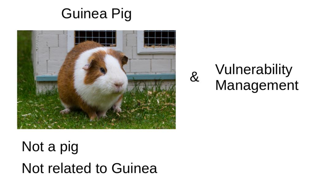 Guinea Pig and Vulnerability Management